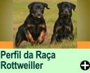 PERFIL DA RAÇA DE CÃES: ROTTWEILER