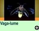 VAGA-LUME