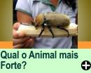 QUAL O ANIMAL MAIS FORTE