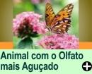 QUAL O ANIMAL COM O OLFATO MAIS AGUÇADO