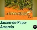 O JACARÉ-DE-PAPO-AMARELO