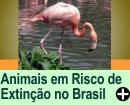 ANIMAIS EM RISCO DE EXTINTIÇÃO NO BRASIL