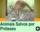 TRILHAS DE JEEP - UM ANIMAIS RADICAL<