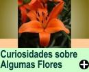 CURIOSIDADES SOBRE ALGUMAS FLORES