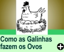 COMO AS GALINHAS FAZEM OS OVOS
