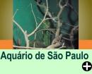 AQUÁRIO DE SÃO PAULO/SP