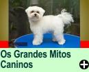OS GRANDES MITOS CANINOS