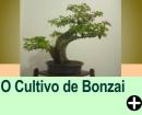 O CULTIVO DE BONZAI