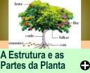 A ESTRUTURA E AS PARTES DA PLANTA