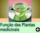 FUNÇÃO DAS PLANTAS MEDICINAIS