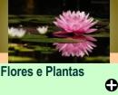 CURIOSIDADES SOBRE FLORES E PLANTAS