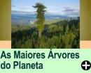 AS MAIORES ÁRVORES DO PLANETA