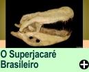 O SUPERJACARÉ BRASILEIRO