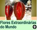 FLORES EXTRAORDINÁRIAS DO MUNDO