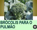 BROCÓLIS PODE PROTEGER O PULMÃO DE FUMANTES, DIZ ESTUDO