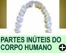 PARTES INÚTEIS DO CORPO HUMANO