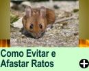 COMO EVITAR E AFASTAR RATOS
