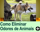 COMO ELIMINAR ODORES DE ANIMAIS
