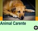 COMO LIVRAR SEU ANIMAL DA CARÊNCIA AFETIVA