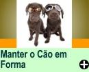 COMO MANTER O SEU CÃOZINHO EM FORMA