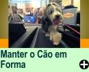 COMO MANTER O SEU C�OZINHO EM FORMA