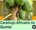 COMO ACABAR COM CARAMUJO AFRICANO, NO QUINTAL