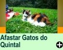COMO AFASTAR GATOS DO SEU QUINTAL