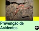 PREVENÇÃO DE ACIDENTES EM CAVERNAS