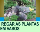 COMO REGAR AS PLANTAS EM VASOS