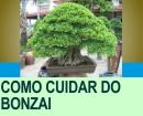 COMO CUIDAR DO BONZAI