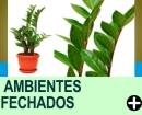 PLANTAS IDEAIS PARA AMBIENTES FECHADOS