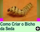 COMO CRIAR O BICHO DA SEDA