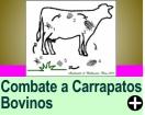 COMBATE AOS CARRAPATOS BOVINOS