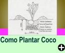 COMO PLANTAR COCO