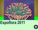 Expoflora 2011 - Holambra/SP
