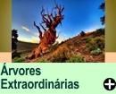 ÁRVORES EXTRAORDINÁRIAS DO MUNDO