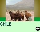 ATRAÇÕES NO CHILE