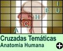 Cruzadas Temáticas de Anatomia Humana
