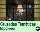 Cruzadas Temáticas de Micolologia