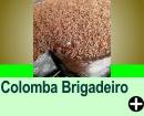 COLOMBA BRIGADEIRO